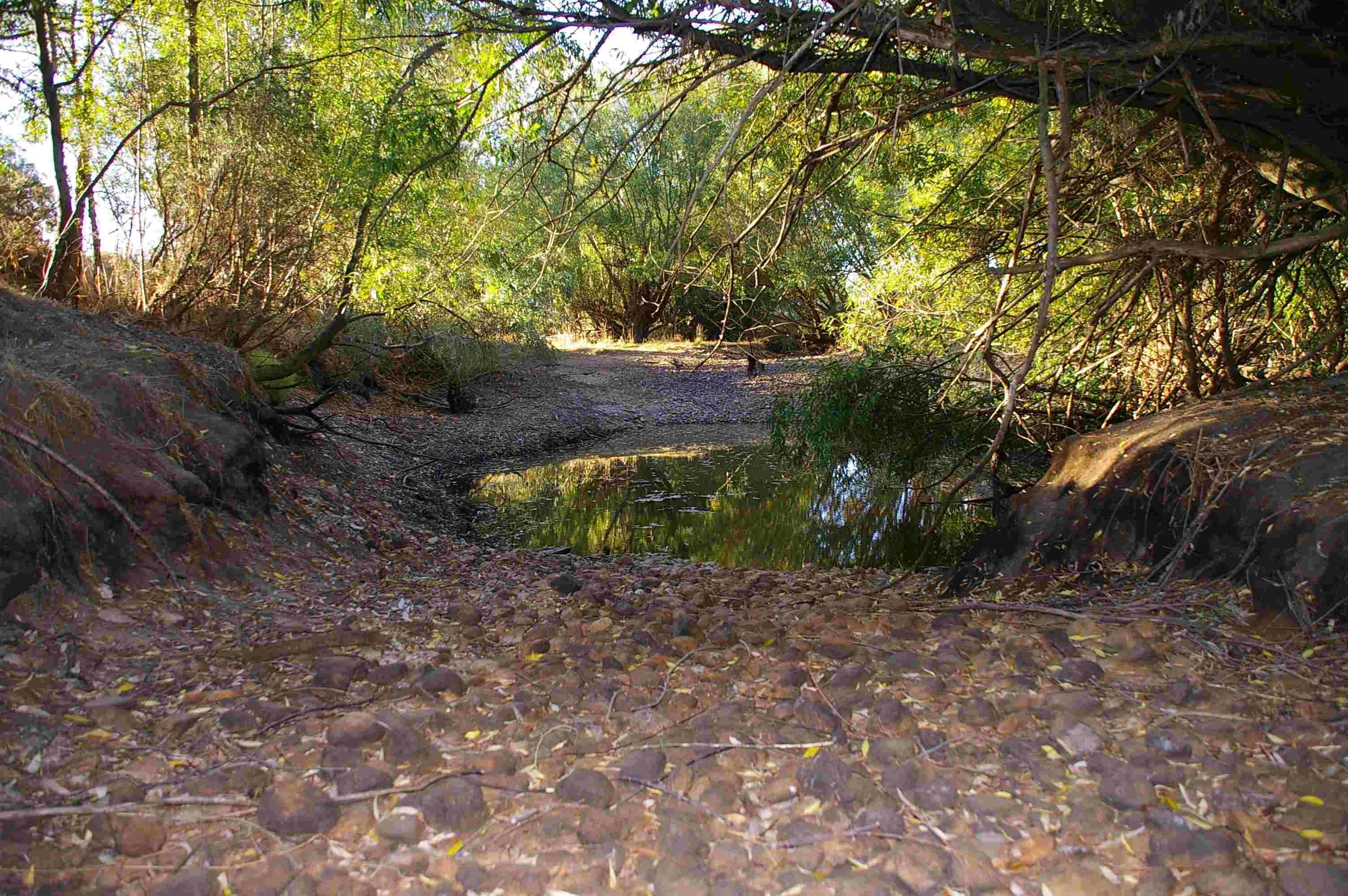 Amazing Loddon River Bed