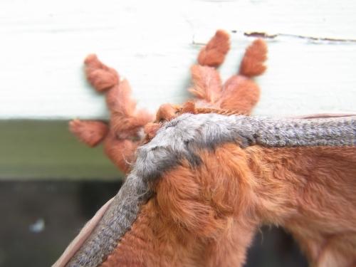 A furry close up