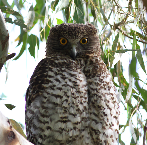 Powl3