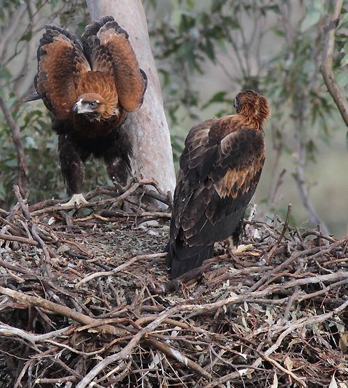 Eagles4