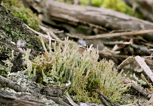 lichen stack 2 crop