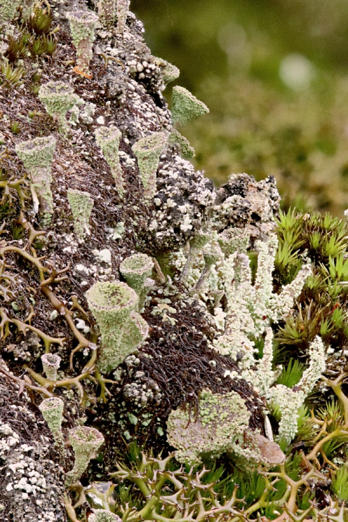 lichen stack 8