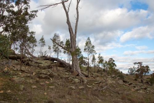 Lightwood3