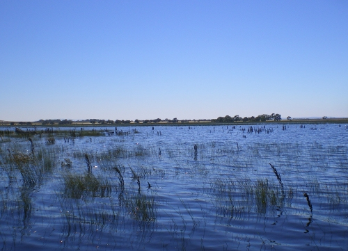 LongSwamp