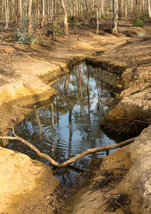 Bush Pool
