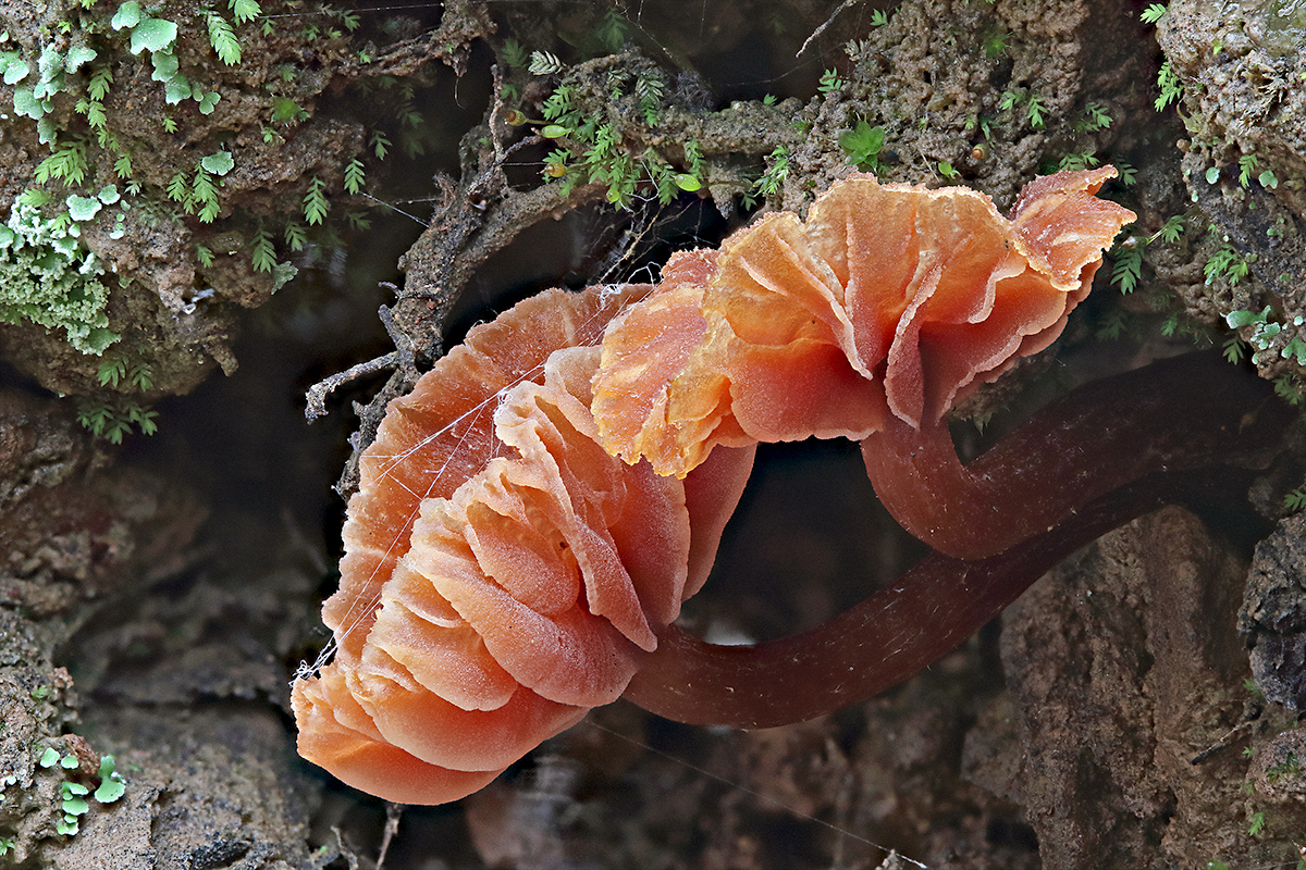 Fungus gills stack 1