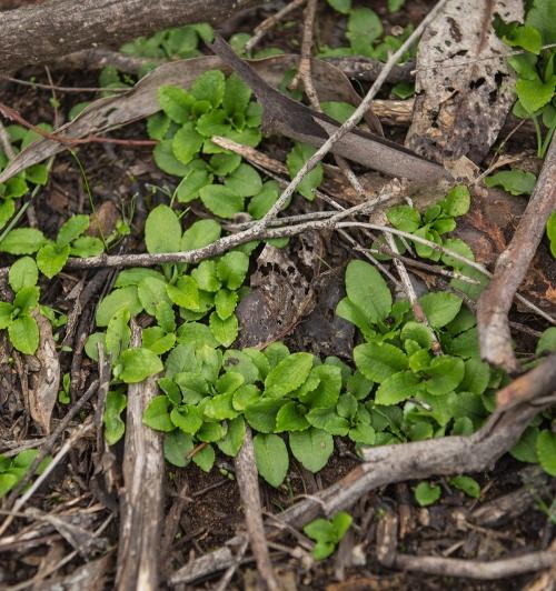 Greenhoods