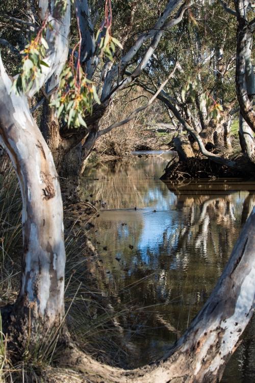 Joyce's-Creek