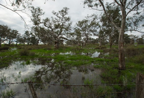 bakersswamp