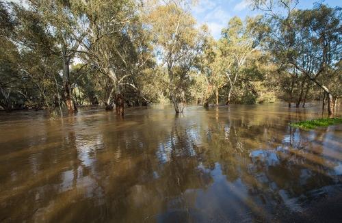 flood5