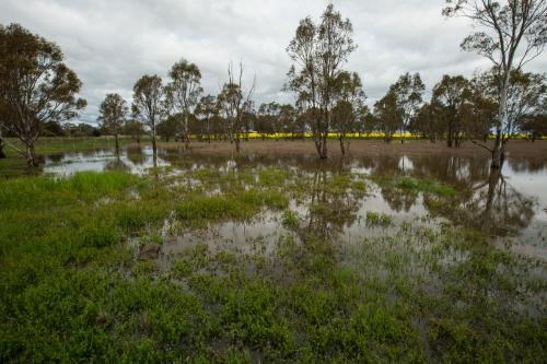 lakesideswamp