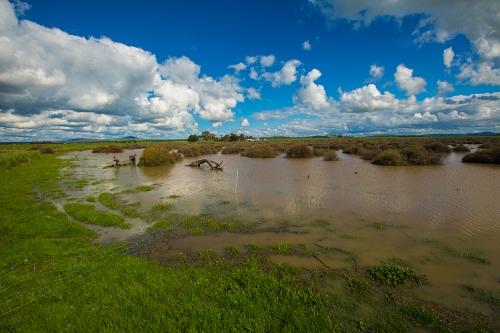 lignumswamp
