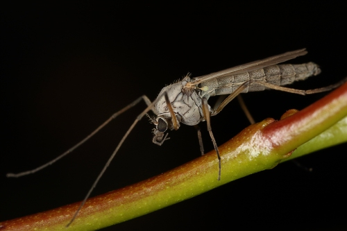 mosquito_16-10-23_13