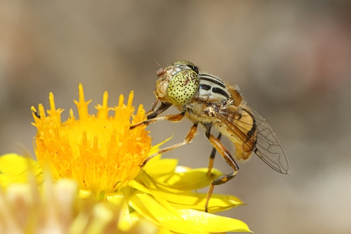 native-drone-fly_16-12-10_4-crop