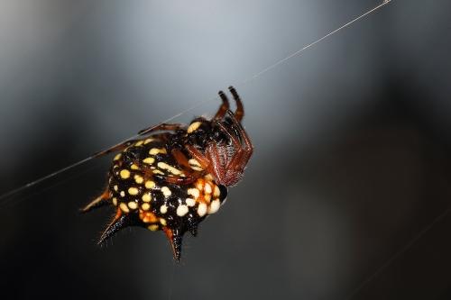 jewell-spider_17-02-26_8