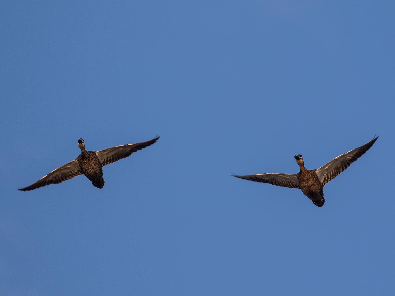 Bird Flight Patterns Awesome Inspiration